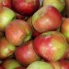Májusra elfogy a magyar alma