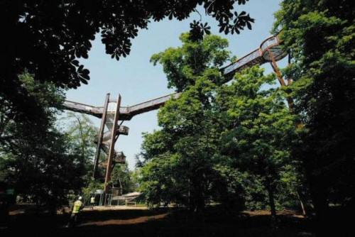 Lombkorona sétány nyílt a Kew Gardensben