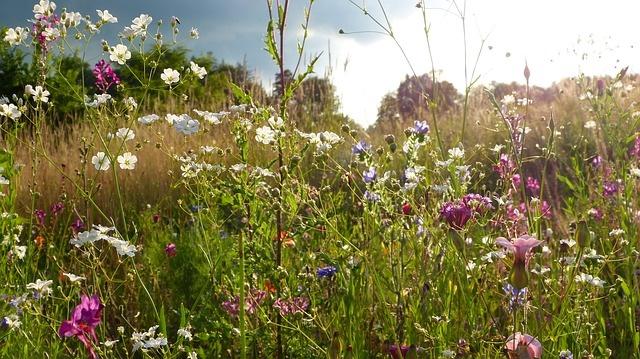 wild-flowers-3528618_640