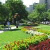 Hogyan lett a ferencvárosi lakótelepből színes virágcsoda?