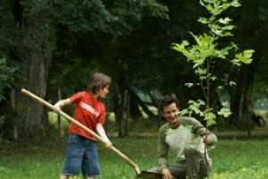 A nyári növényültetés legfontosabb szabályai