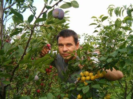 Csodagyümölcsös: 57 fán 300 gyümölcsfajta