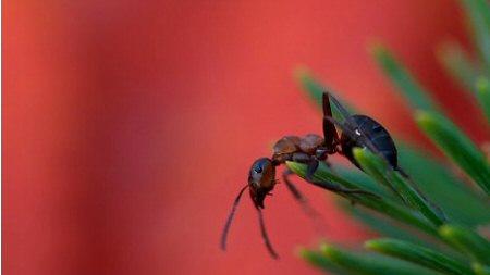 Házi praktikák legyek, darazsak, hangyák ellen