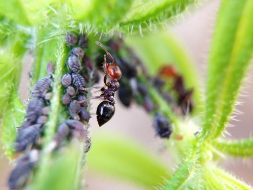ant-1379893_1920