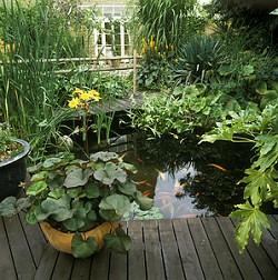 Hol van a kerti tó helye a kertben?