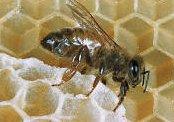 Hogyan védik a környezetet a méhek?