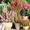 A kertészet 3 nagy növénykedvence