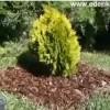 Hogyan ültessünk ősszel növényeket? - Videó