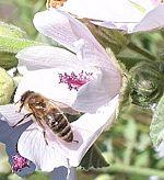Most indult meg a méhcsaládok fejlődése