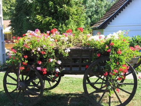 Újból versenyzünk a Virágos Magyarországért