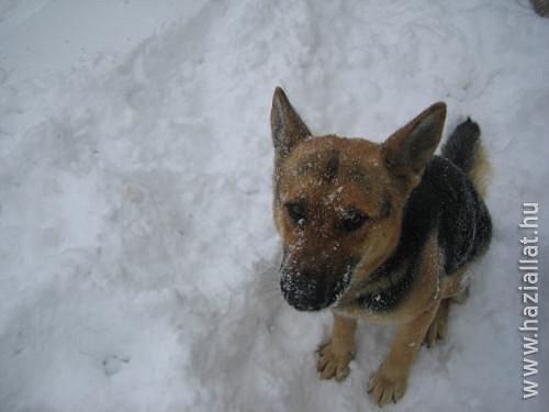 Télen megfagynak a kóborló állatok?