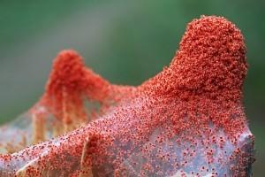 Hogyan védjük növényeinket a takácsatkáktól?