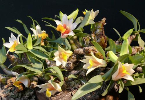 Orchideák, majd karácsonyi készülődés a Vajdahunyad Várban