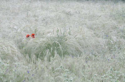 Legszebb hazai kertfotók - Eredményhirdetés