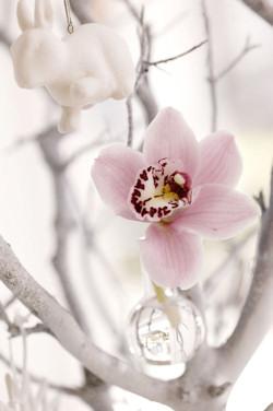 Top 6 trendi vágott virág - 2008 tél