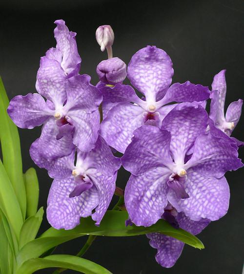 Ehető orchideák és más nyalánkságok - ettől esel szerelembe?