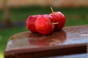 Acerola, a természetes vitamin - mit tesznek az üdítőnkbe?