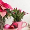 Milyen növények illenek a karácsonyi hangulathoz? Ünnepi dekoráció szobanövényekkel