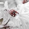 Imádod a havat? Nézz szép téli képeket!