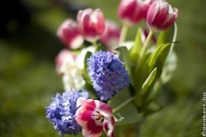 Kreatív vágott virág ötletek!