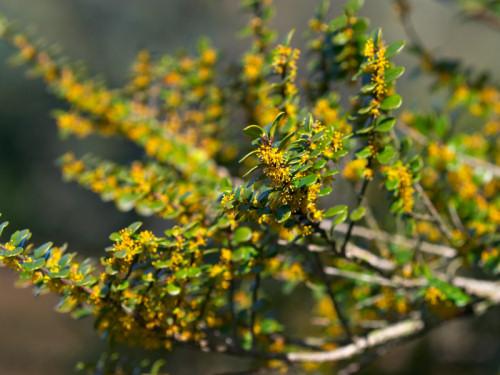 A legszívósabb fagytűrő szobanövények