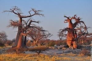 Bemutatjuk a Föld legkülönlegesebb fáit videón!