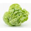Márciusig nem várható javulás: 150 Ft körül a fejes saláta