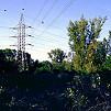 210 tő védett homoktövist tarolt le az áramszolgáltató