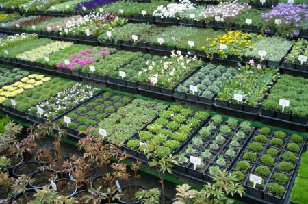 Ne hagyd magad becsapni! Növényvásárlási tanácsok