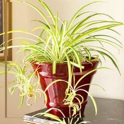 Strapabíró szobanövények, melyek nem fognak ki rajtad