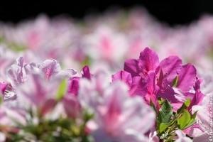 Milyen virágot vegyünk ajándékba?
