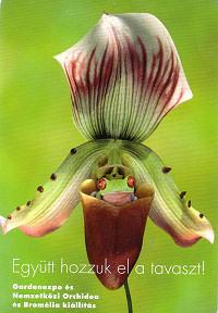 Együtt hozzák a tavaszt: orchidea- és kertészeti kiállítás