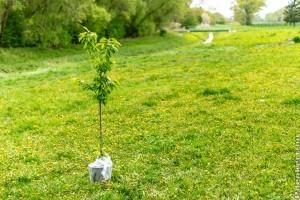 Ajánlott ültetési távolságok - hogy ne legyen gond a szomszéddal