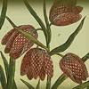 Ma nyílik az első Herbáriumok kiállítás
