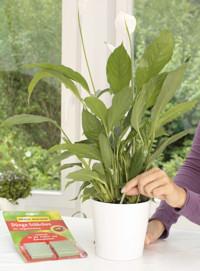 Cserepes és balkonládás növények kényelmes tápanyag-utánpótlása
