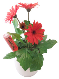 Ragyogó növények társaságában várni a locsolókat
