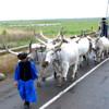 Látványos állatkihajtásra és biovásárra készülnek a Hortobágyon