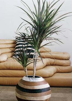 Modern retro lakásba milyen szobanövények illenek?