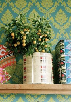 Szobanövények, melyek színeikkel felpezsdítik otthonod