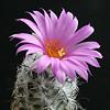 Virágos programajánló: kaktuszkiállítás a füvészkertben