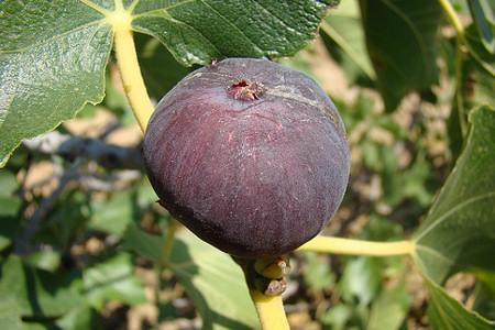 Közönséges fák és cserjék gyógynövény szerepben