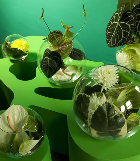 2009 nyár trendi virágai: flamingó, kála, dália és a kapor