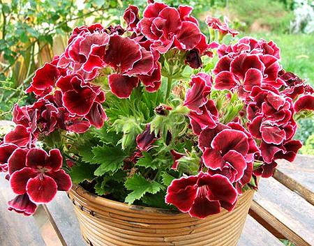 5 tipp, hogy balkonnövényeink buján virágozzanak