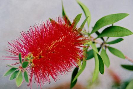 Mediterrán növényeket mediterrán virágföldbe