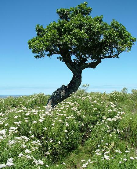 Miért szeretjük a fákat?