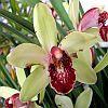 Hogyan neveljük az orchideát?
