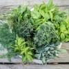 Hogyan kell fagyasztani a gyógynövényeket?