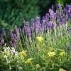 Illatos kert – de mitől illatos?