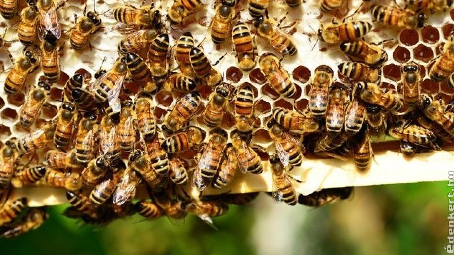 Mit tudunk a méhekről? Egy miniállam élete