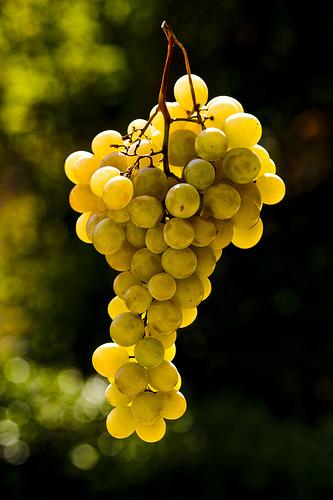 Borkóstoló-Illatos mátrai borokkal frissíthetjük magunkat nyáron!